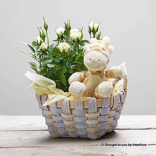 White Rose Baby Basket