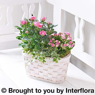 Rose & Kalanchoe Basket