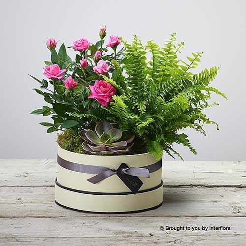 Zen Planted Hatbox