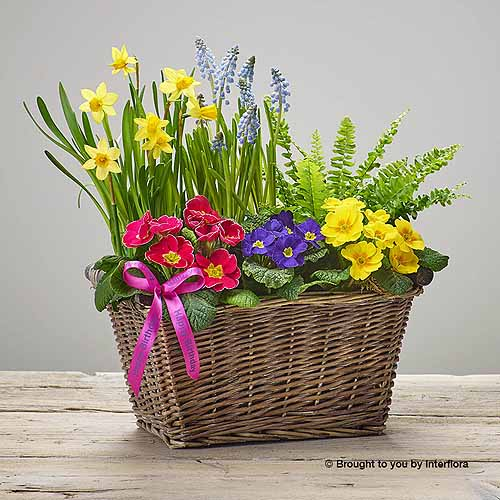 Bright Planted Basket