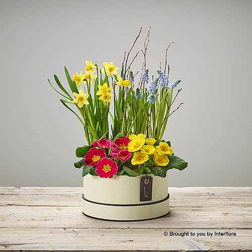 Mixed Planted Hatbox